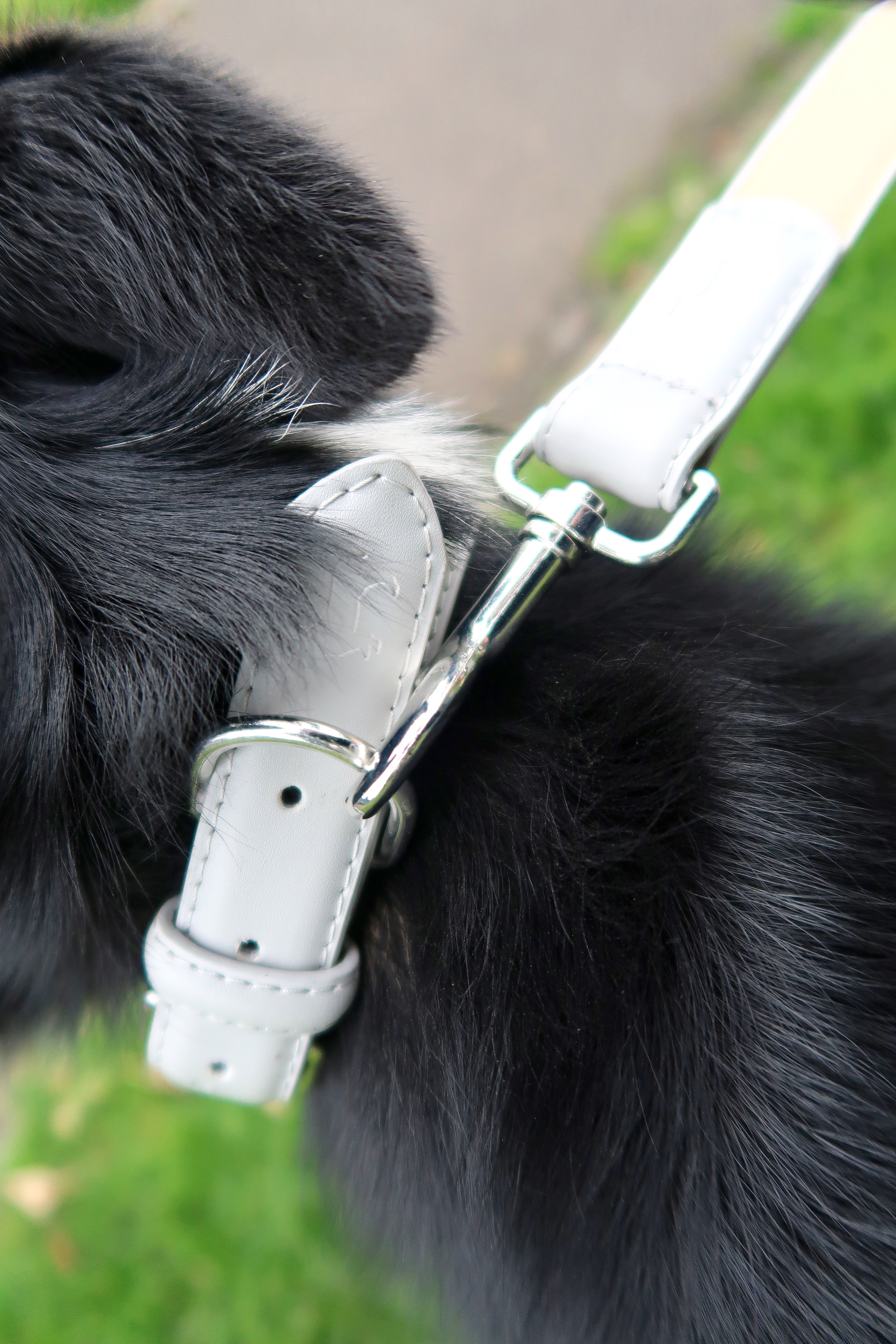 Dog Friendly - Luxury Dog Accessories From Barc London