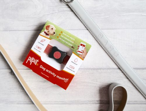 PitPat dog activity monitor with dog lead